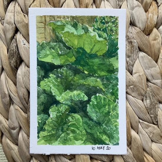 Rhubarb leaves; Gouache on Stonehenge mini pad
