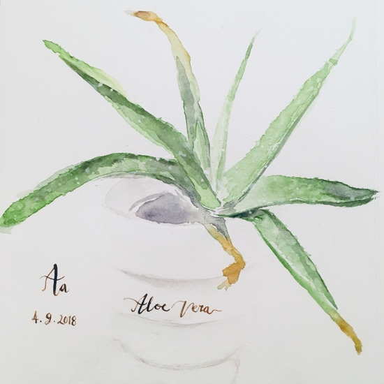 A is for Aloe Vera; Watercolour on Moulin du Roy HP paper