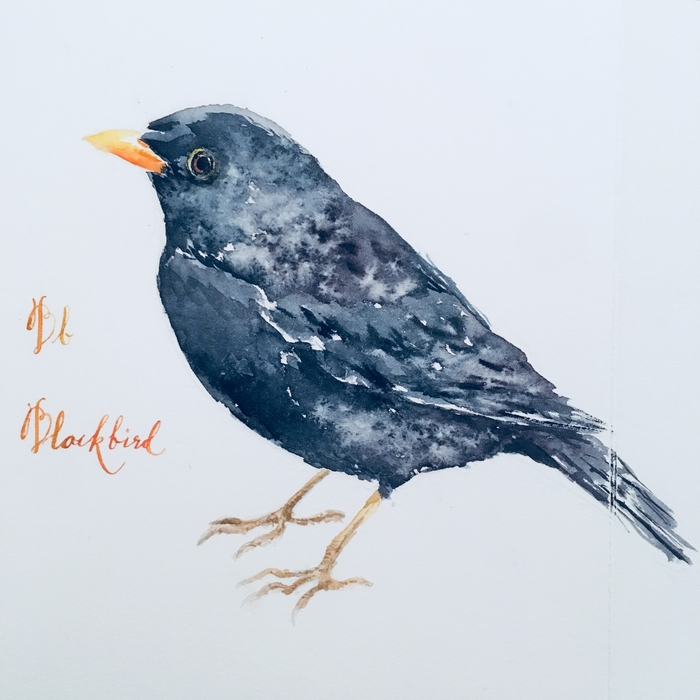 B is for Blackbird; Watercolour on Moulin du Roy HP paper