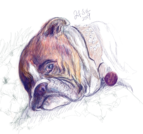 Sleepy pug; Modified pencil brush on Procreate