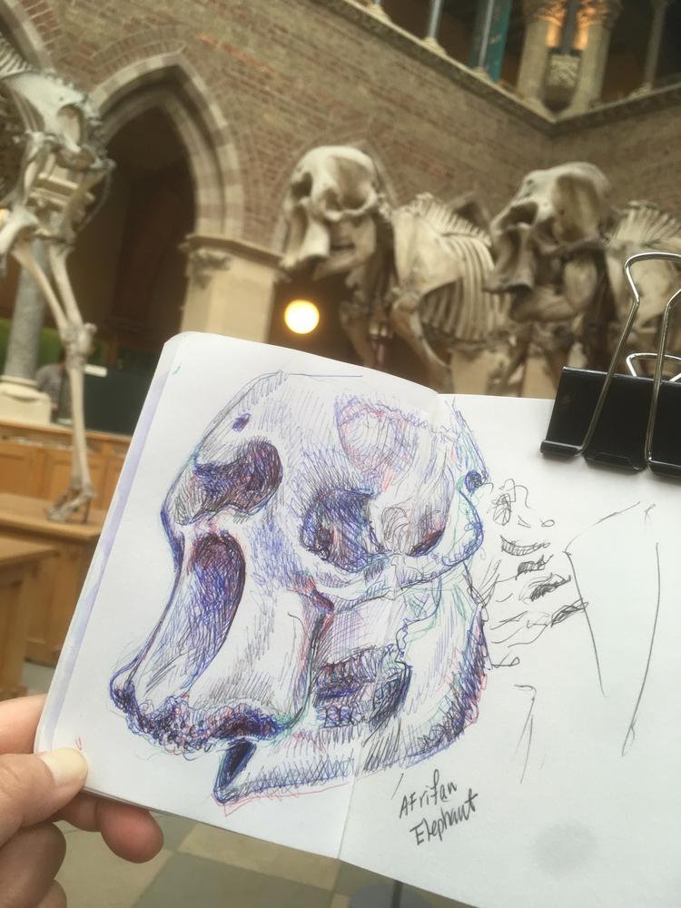 Urban sketching at Museum of Natural History, Oxford