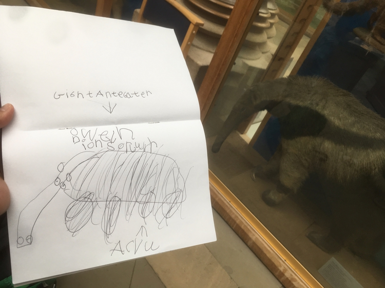 Owen's urban sketching at Museum of Natural History, Oxford