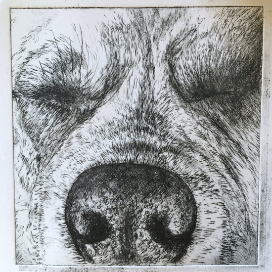 Sleeping dog; Drypoint etching on plastic packaging