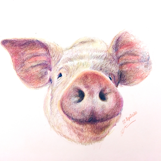 Pork; Coloured pencils